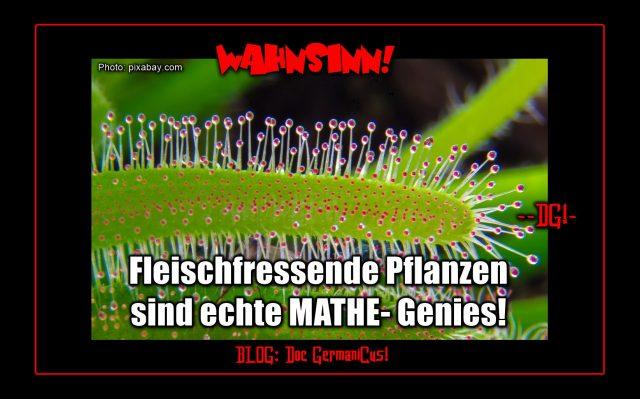 Fleischfressende Pflanzen! Photo: pixabay.com